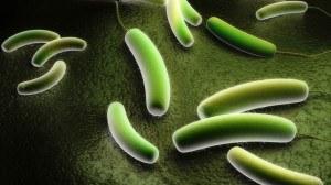 ViscoTec Dosierung Inokula Substratstrom Fermenter